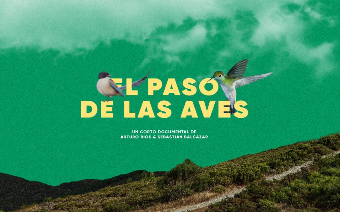 El Paso De Las Aves